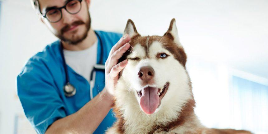 Ударно-волновая терапия у собак
