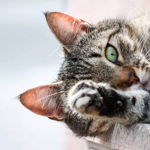 Сахарный диабет собак и кошек
