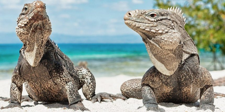 Стресс у рептилий и как его избежать