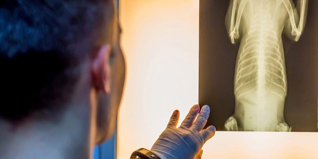 ветеринарная травматология и ортопедия