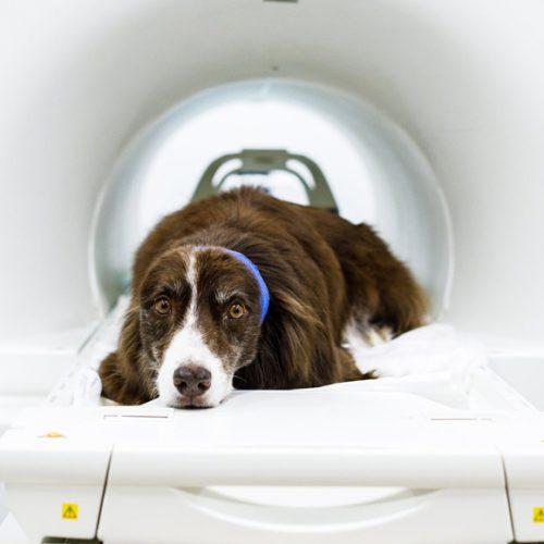 МРТ и КТ у кошек и собак
