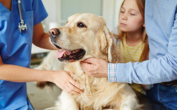 Разрыв диафрагмы у собаки