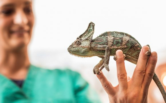 Рекомендации по содержанию рептилий