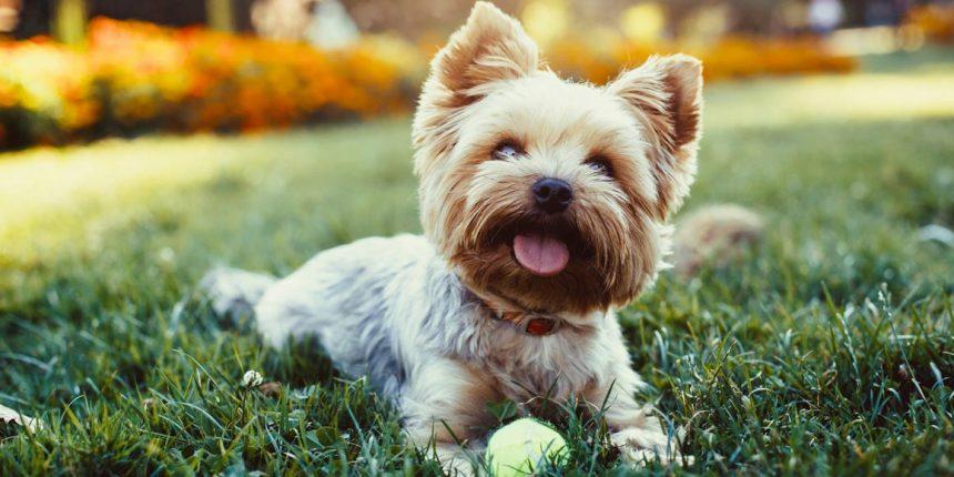 Диагностика и лечение вывиха тазобедренного сустава у собак
