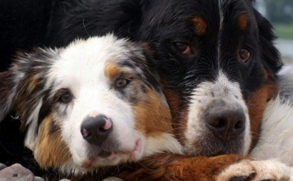 Лечение рака у собак и кошек вакцинацией