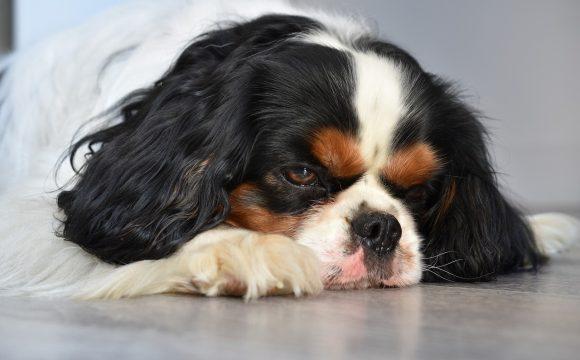 Эстезионейробластома у собак