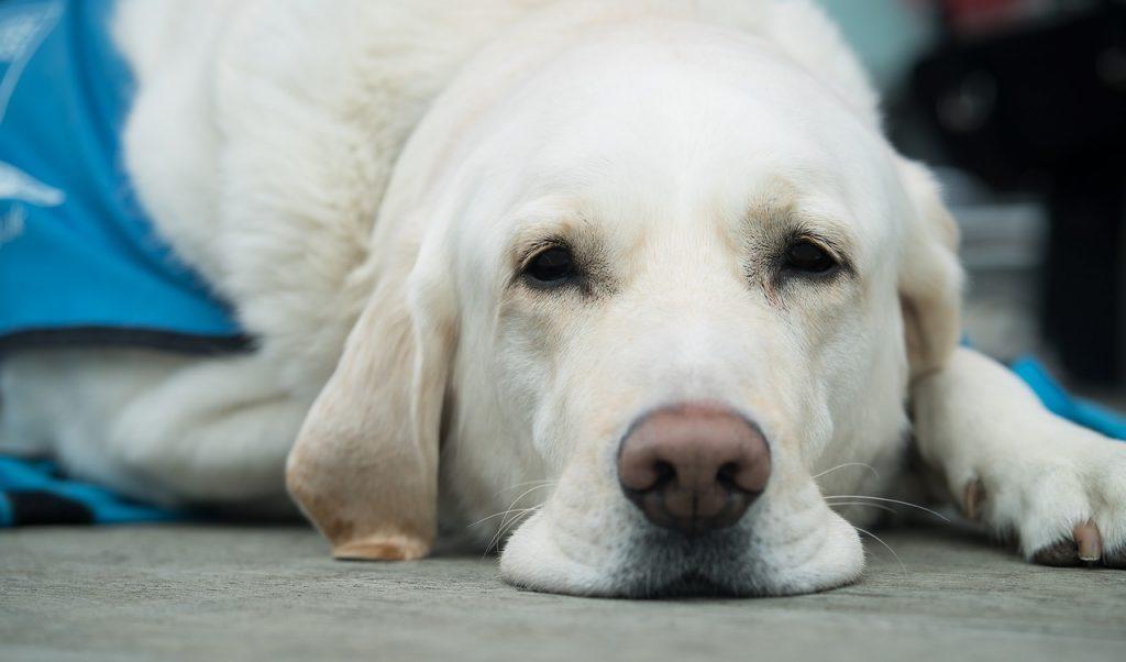 грыжи шейного отдела у собак