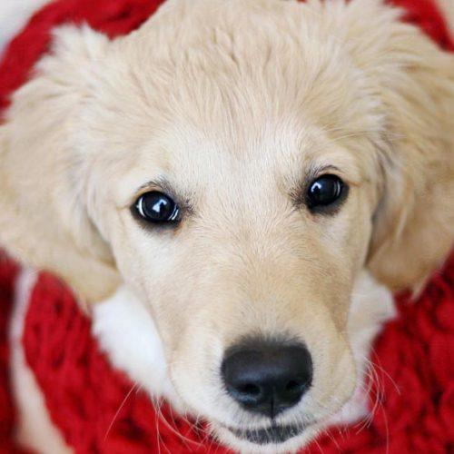 Объемные образования сердца у собак и кошек