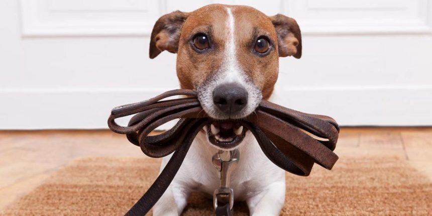 Недостаточность митрального клапана у собак