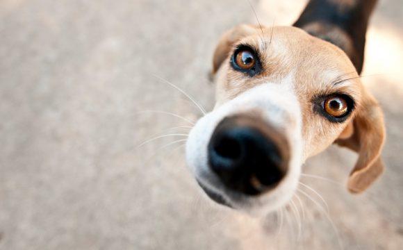 Полипы носа у собак и кошек