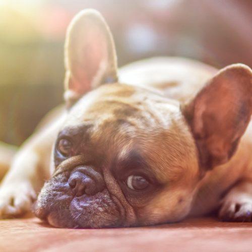 Болезни щитовидной железы у животных