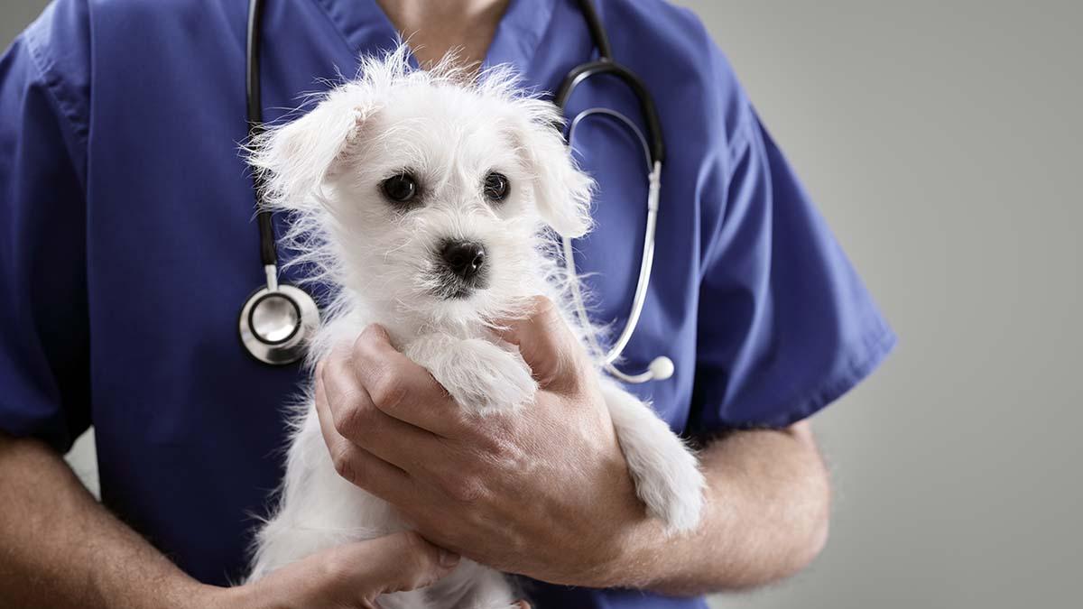 Трахеобронхоскопия собаке
