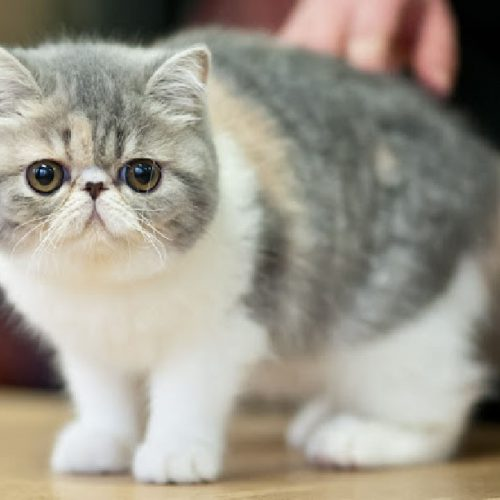 Опухоли щитовидной железы у кошек и собак